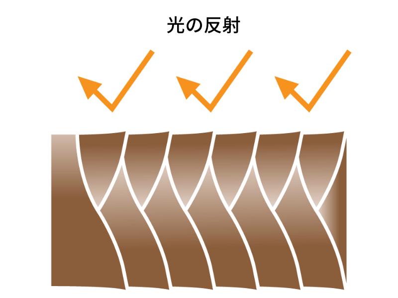 キューティクルの光の反射図